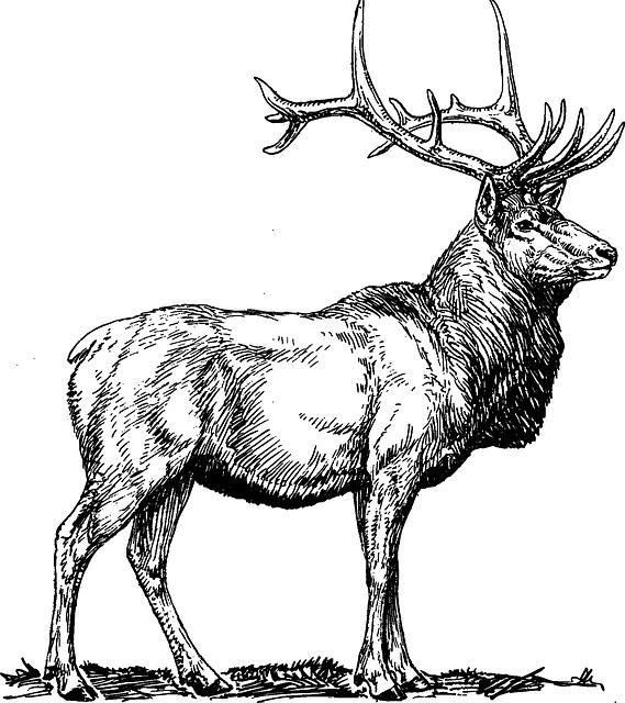 graphic freeuse Free Image on Pixabay