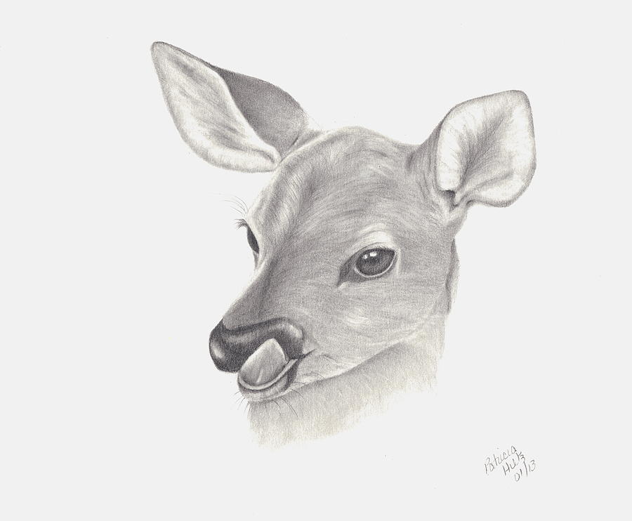 graphic freeuse download Drawing deer baby.