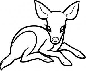 banner transparent library How to draw a. Drawing deer baby