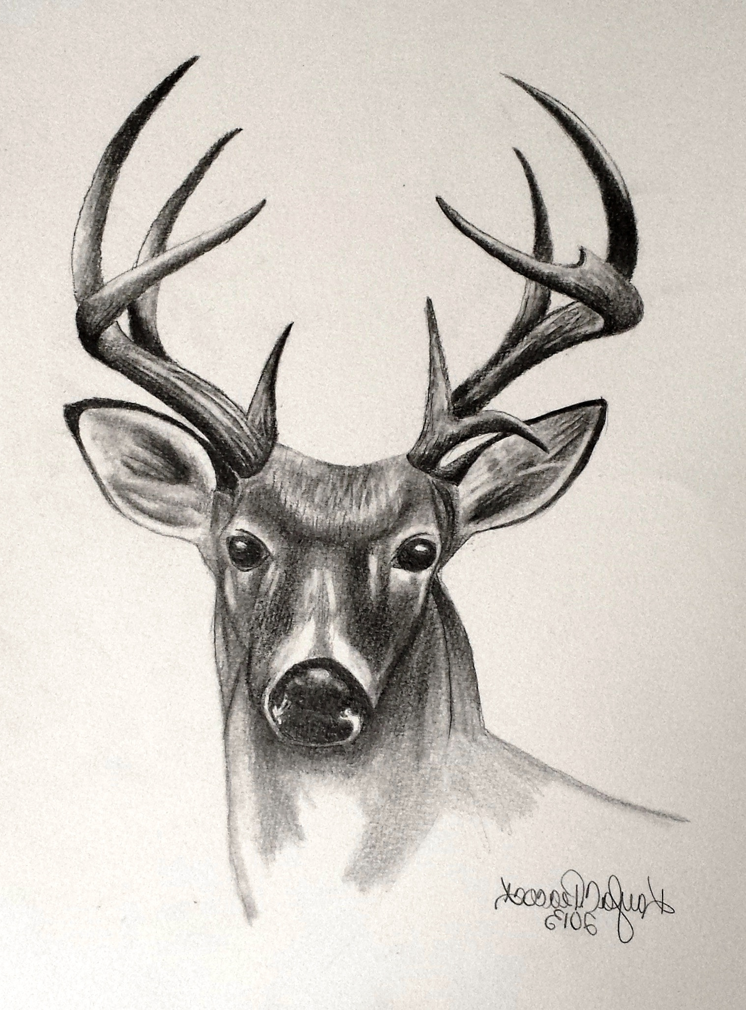 banner free library Drawing deer pencil. Sketch at paintingvalley com