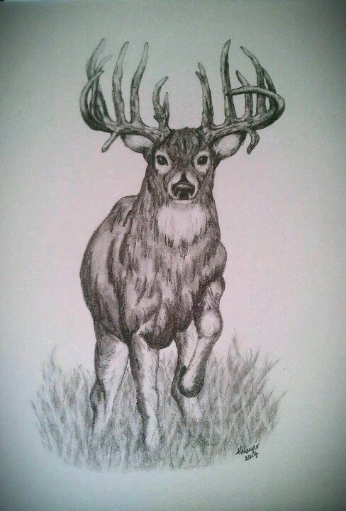 download Whitetail pencil sketch by. Drawing deer trophy buck