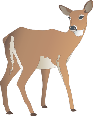 graphic transparent download Collection of free Drawing deers doe