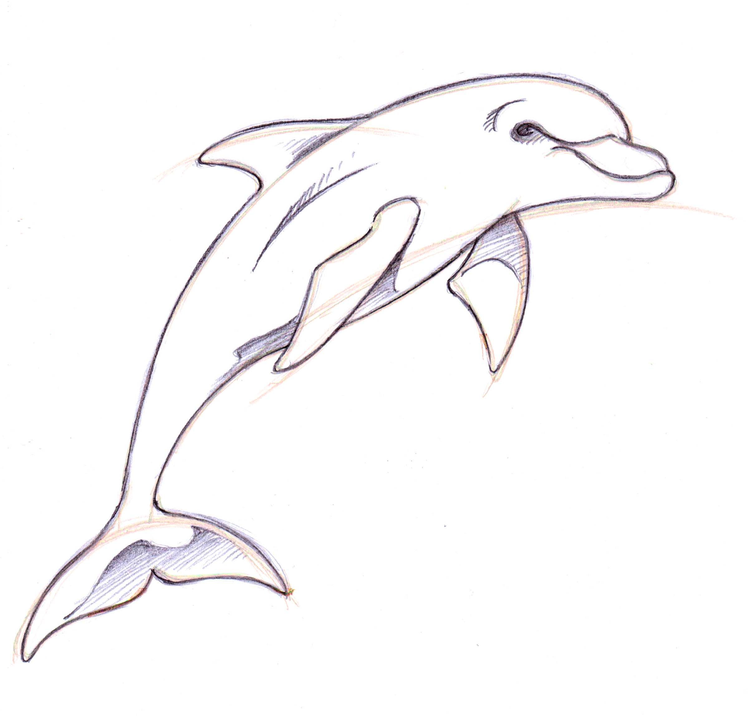 jpg library download Drawing dolphin. Hand in