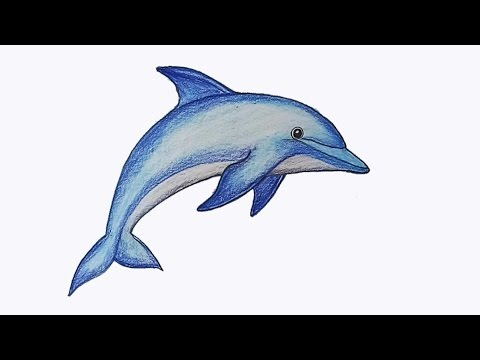 picture How to draw step. Drawing dolphin