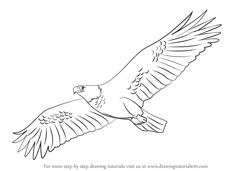 svg black and white download Drawing eagle. Learn how to draw