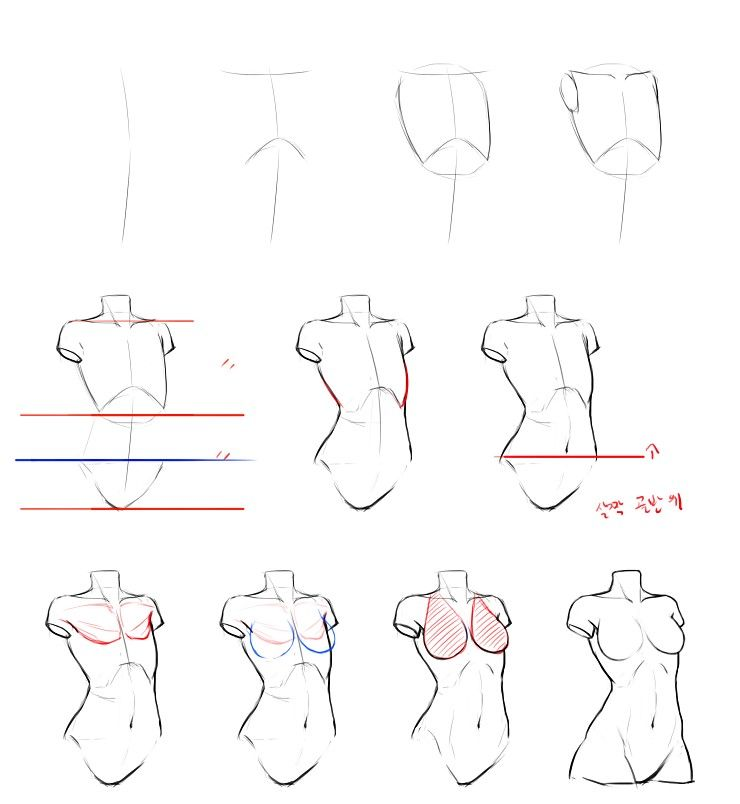 clip library library Reference guide step by step drawing female torso