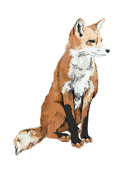 picture black and white download tumblr transparent foxes