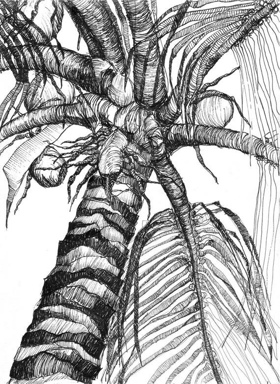 clip free download Art pen and ink. Palm drawing tropical tree.
