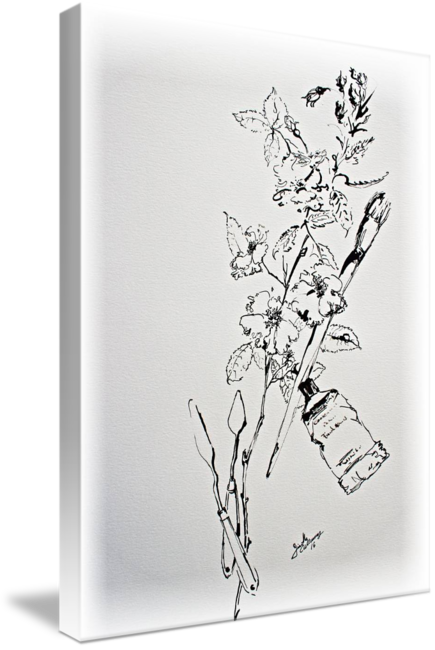 png black and white Ink Line Work Still Life Flowers and Objects by Ginette Callaway