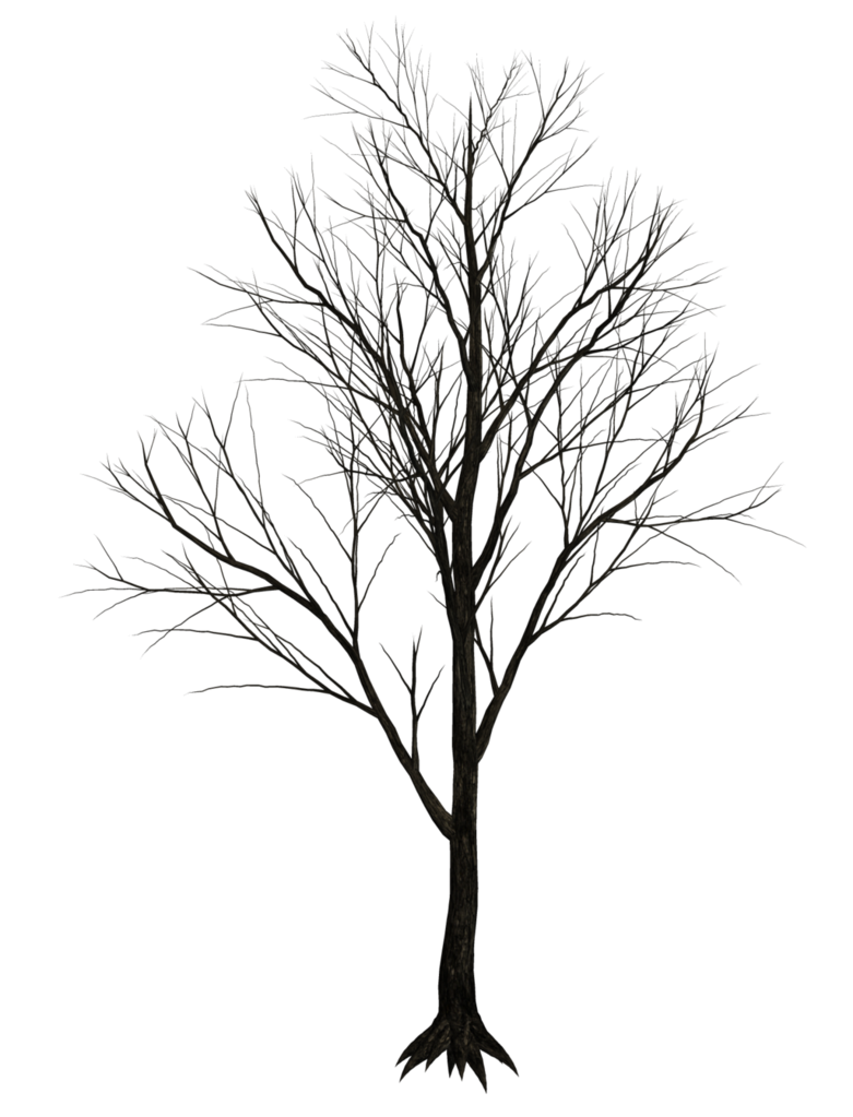 picture transparent stock Drawing reflections tree. Dark at getdrawings com