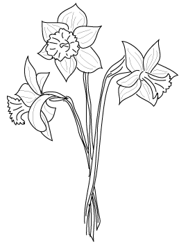 vector black and white Daffodil Flower Drawing at GetDrawings
