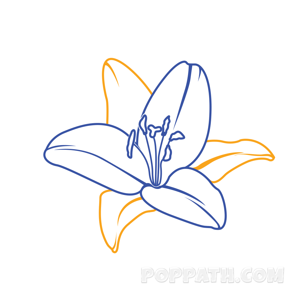 graphic free library How To Draw A Lily