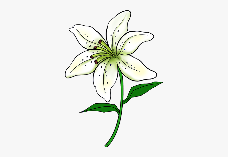clip black and white Drawing Lilly Lily Flower