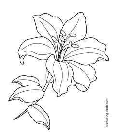 graphic black and white download drawing lilly line #134621135