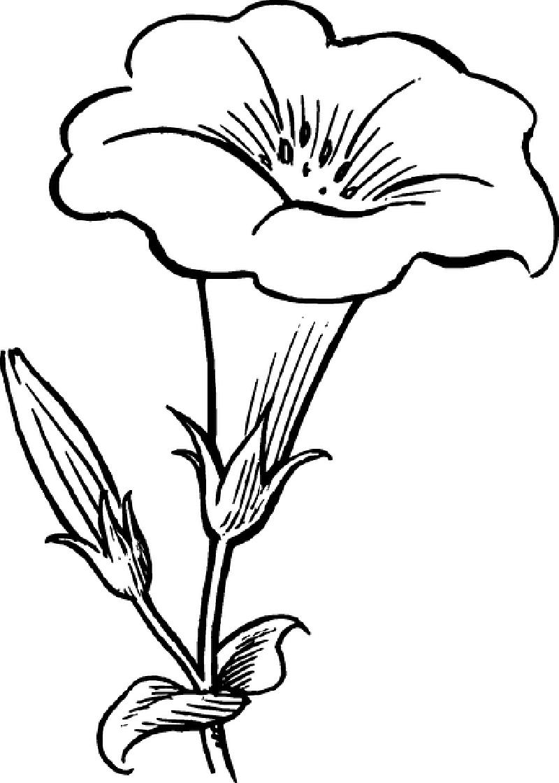 image black and white stock Afbeeldingsresultaat voor pentekeningen van bloemen