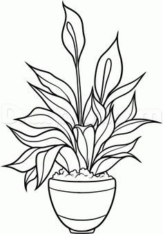 picture library download how to draw a peace plant