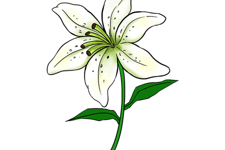 picture free library tiger lily flower sketch