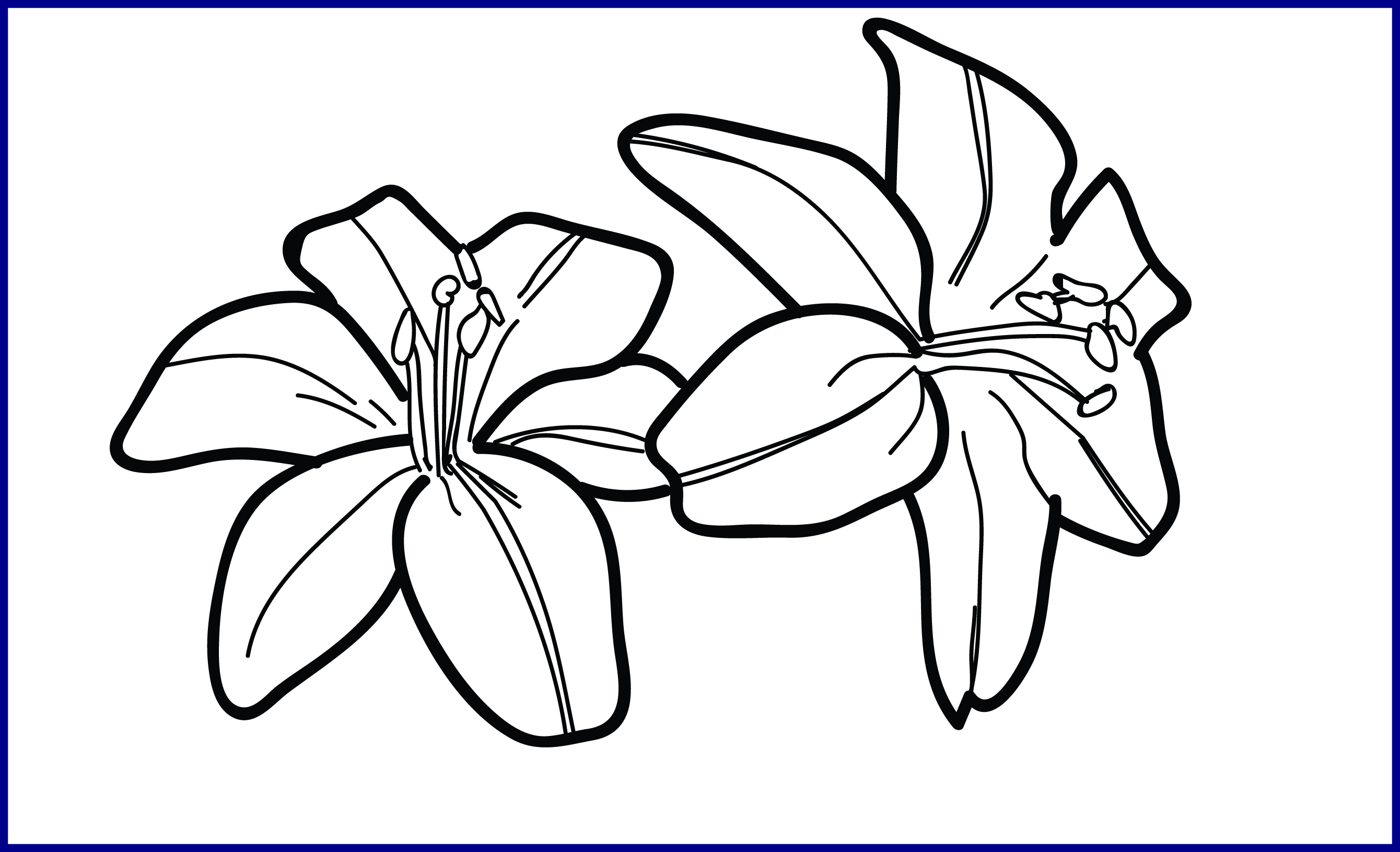 graphic black and white Incredible Tiger Lily Drawing Get Bubbles Pic Of Flower Outline