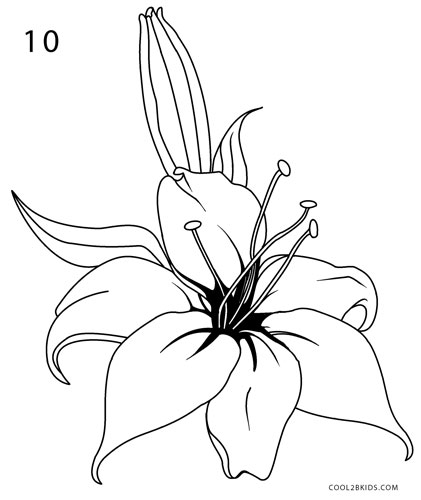 svg freeuse download How to Draw a Lily