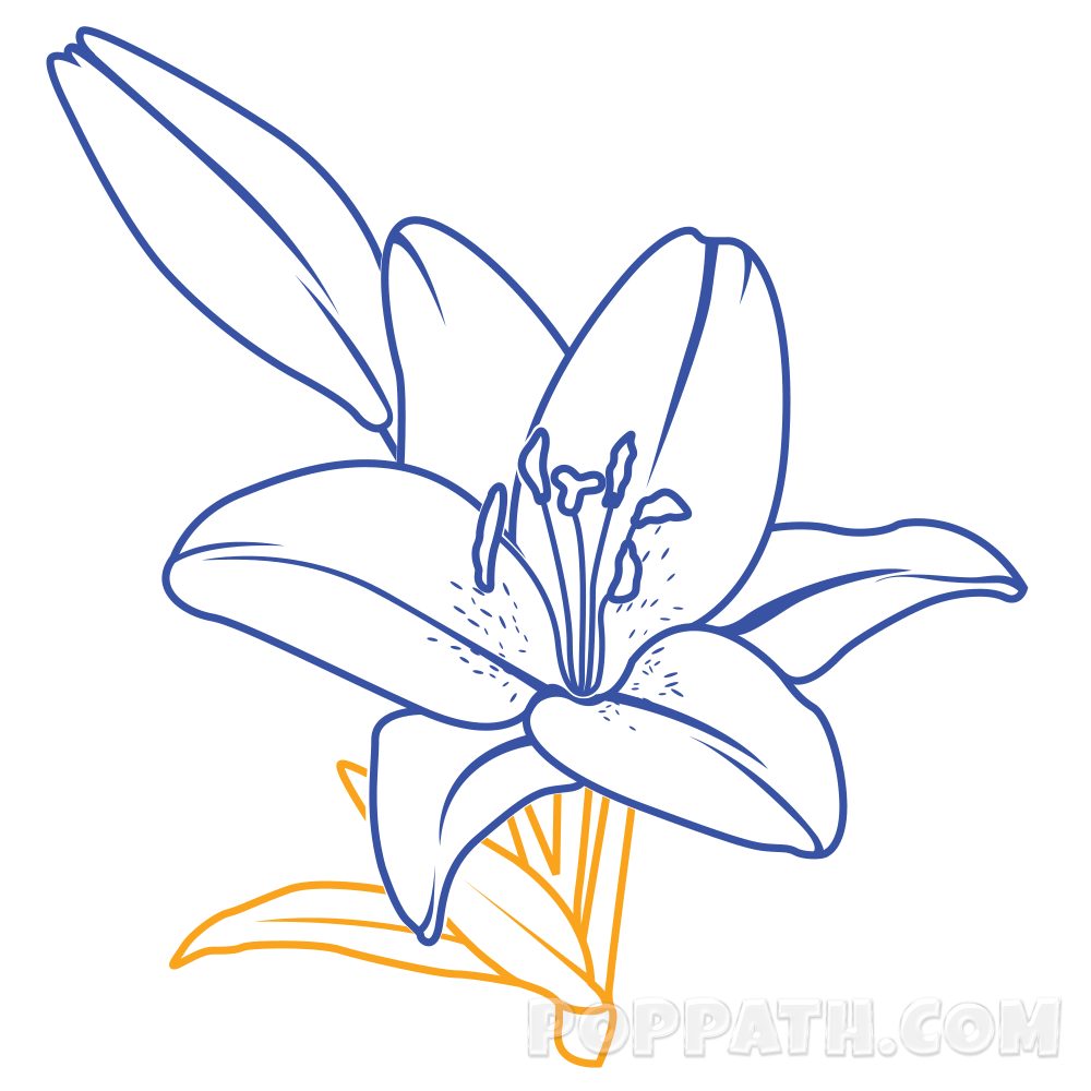 svg library library How To Draw A Lily