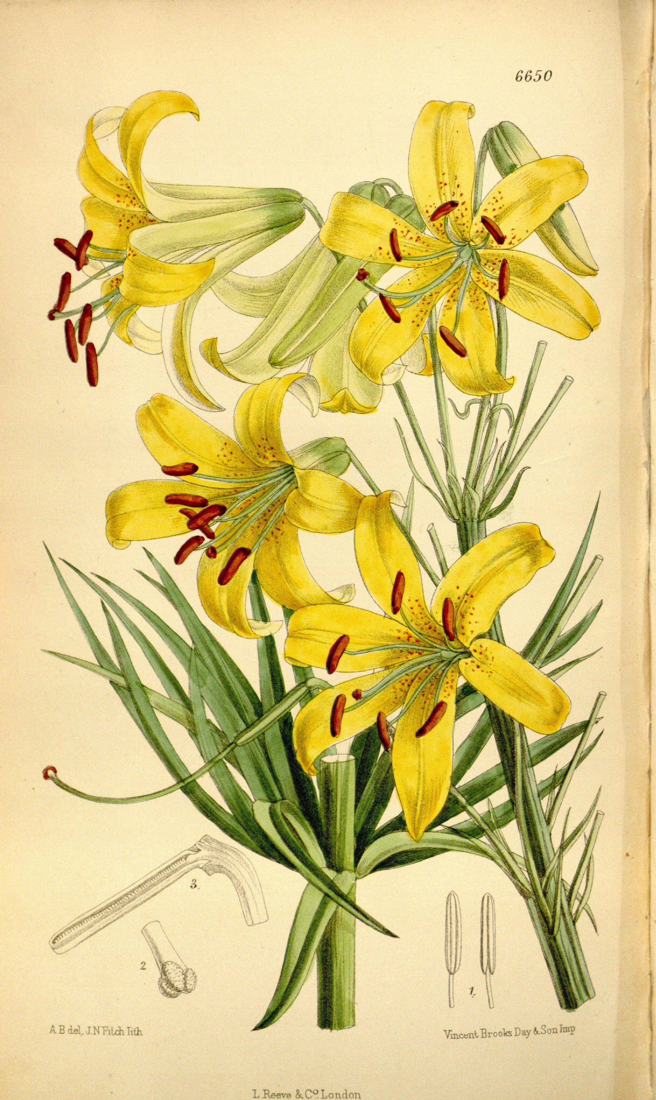 free library Lemon Lily