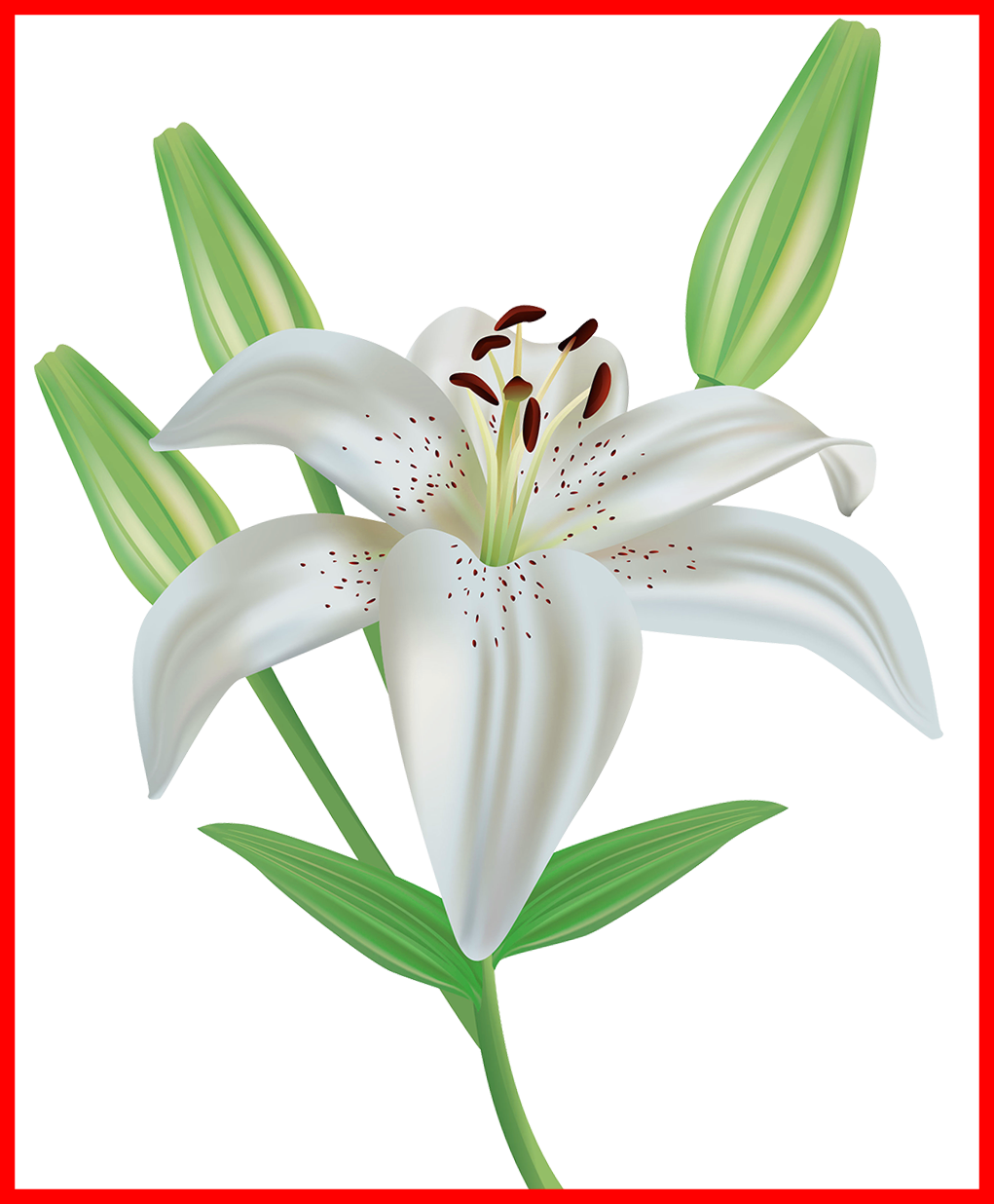 clipart royalty free library Fascinating Collection Of White Lily Flower Clipart High Quality