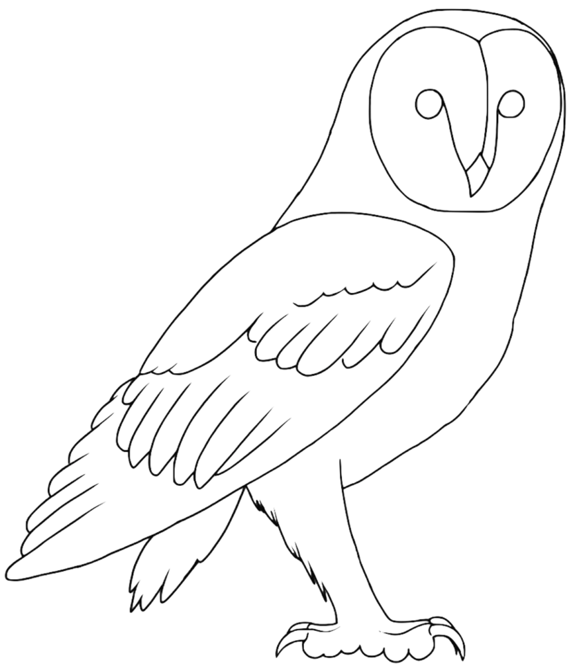 image transparent download Drawing owl line. Free barn lineart by