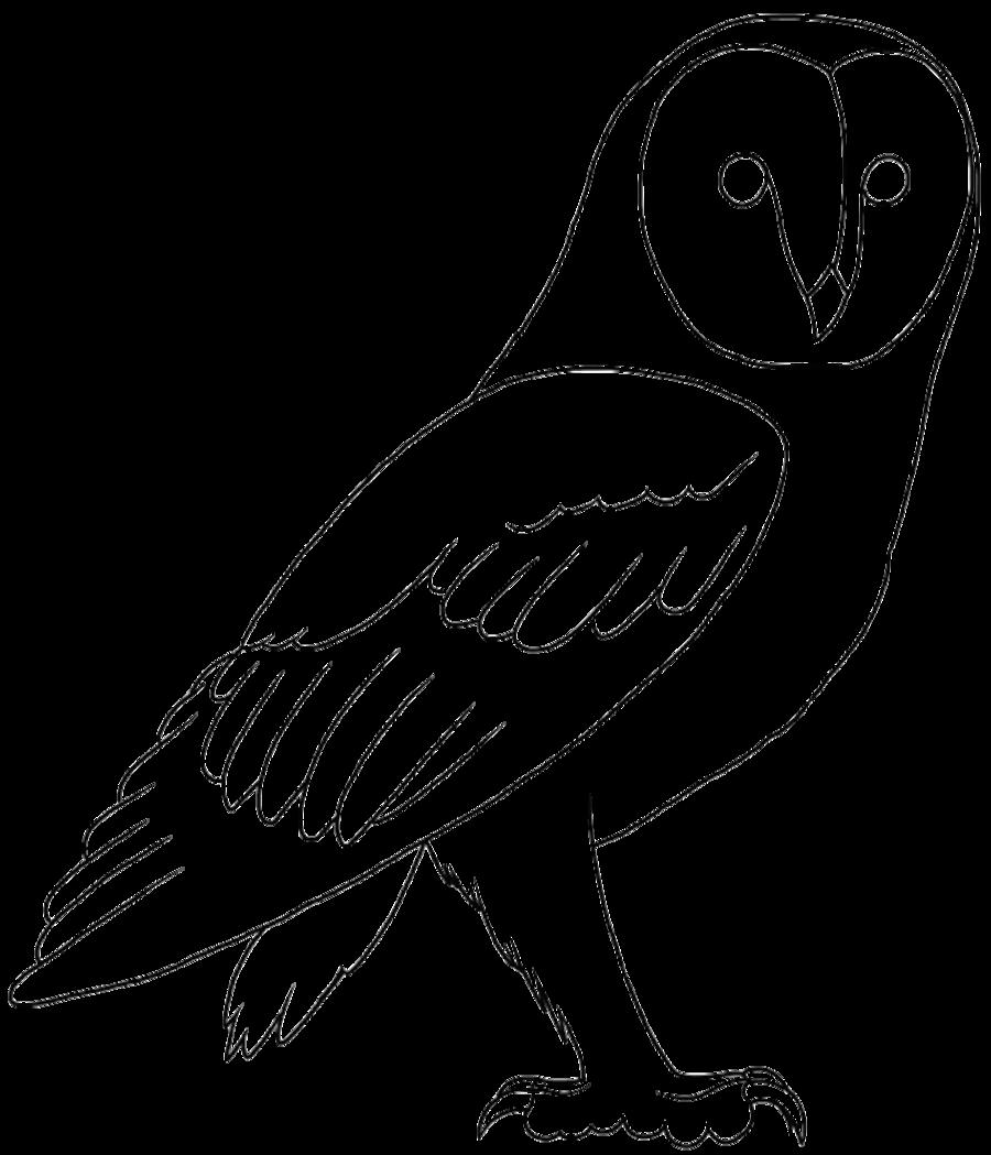 image transparent stock At getdrawings com free. Drawing owl line