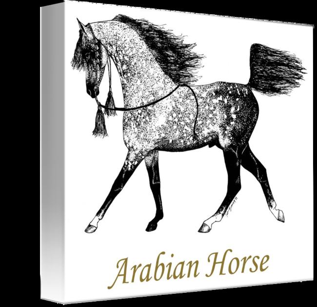 vector download Arabian Horse Drawing by Valerie Evanson
