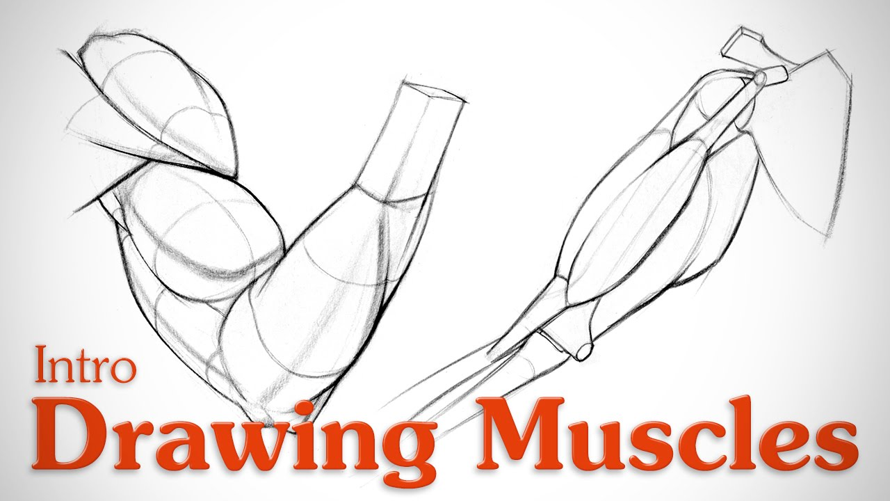 clip art transparent library Muscles what you need. Bicep drawing deep