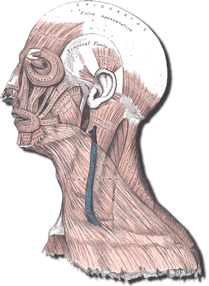 download Are you experiencing neck. Drawing pain deep