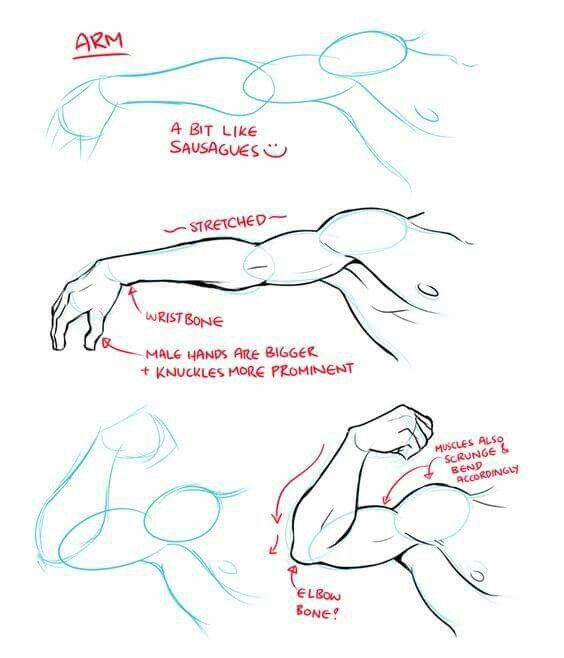 clip transparent Arm biceps muscle reference. Bicep drawing male