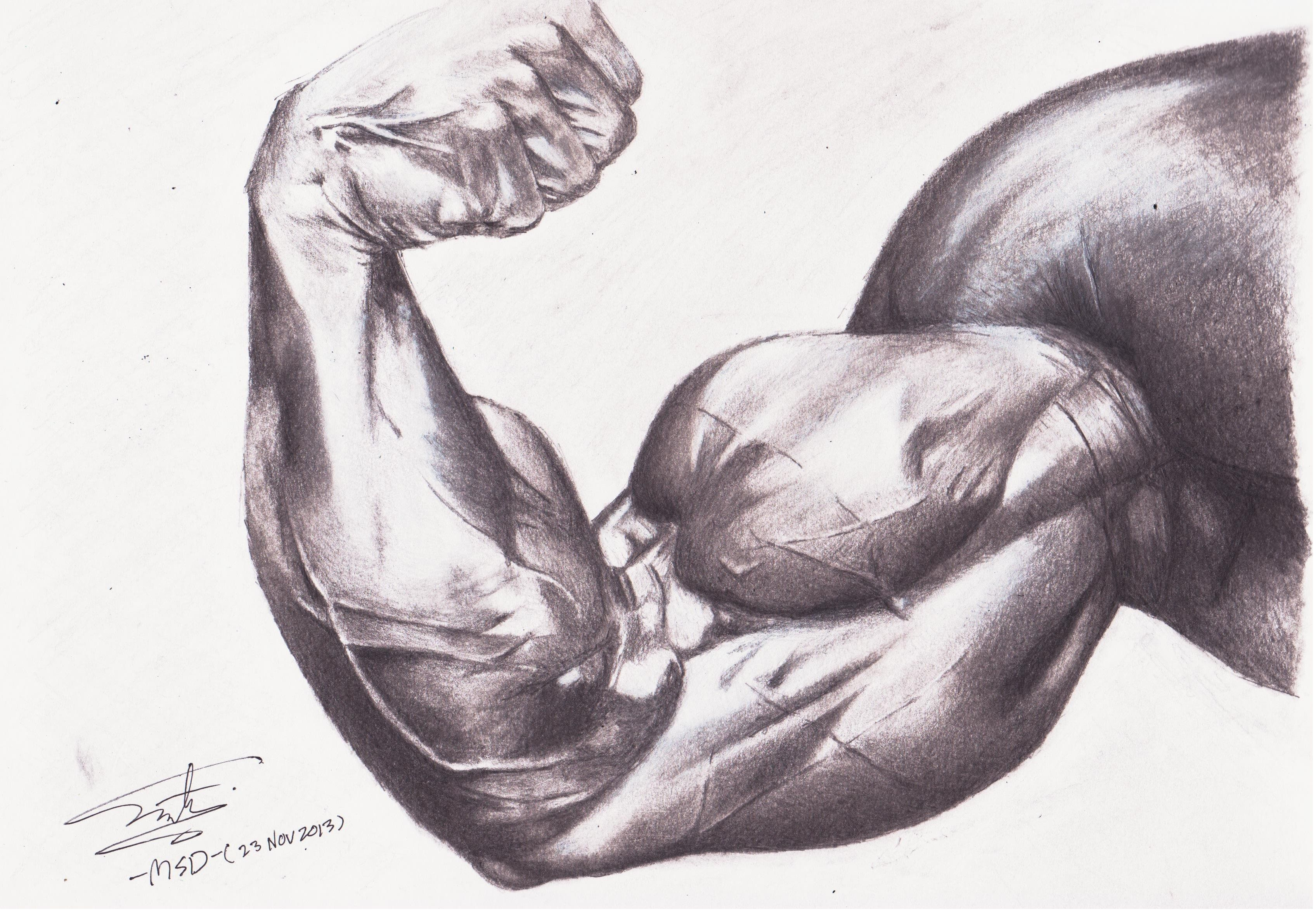 graphic library library Muscle google search drawings. Bicep drawing pencil
