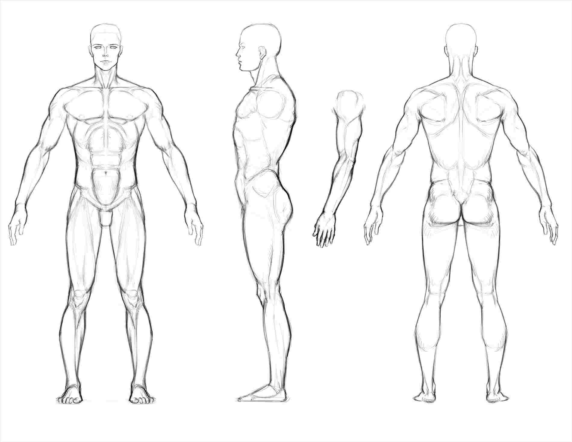 banner library stock Muscular body at paintingvalley. Drawing ref muscle