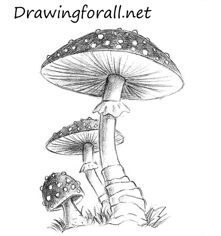 png royalty free How to draw a. Shroom drawing