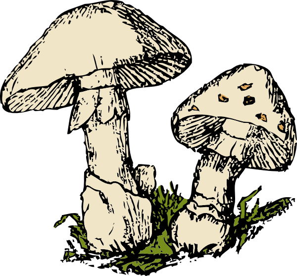 jpg transparent stock Mushroom Clipart Free at GetDrawings