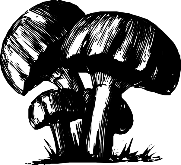 jpg free Black And White Mushroom Drawing at GetDrawings