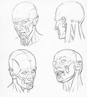 image transparent stock Shoulders human . Drawing neck head and