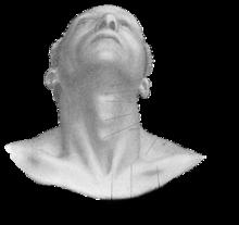 banner transparent stock drawing necks human neck #112055700