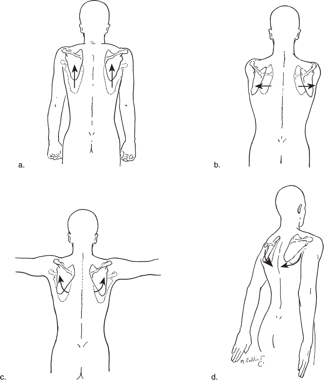 clip art Drawing nipples anatomy. Related image upper body