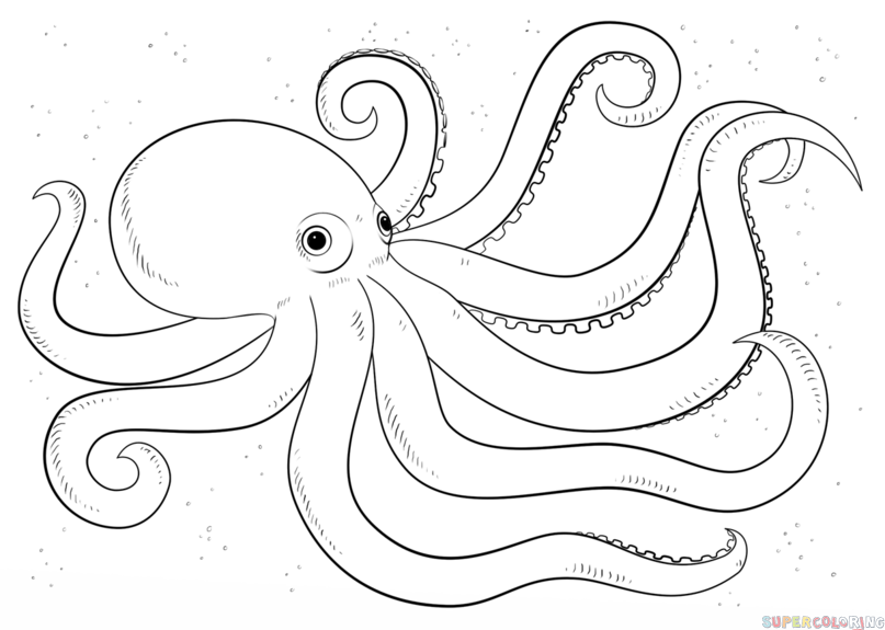 clip library download Drawing octopus easy. How to draw an