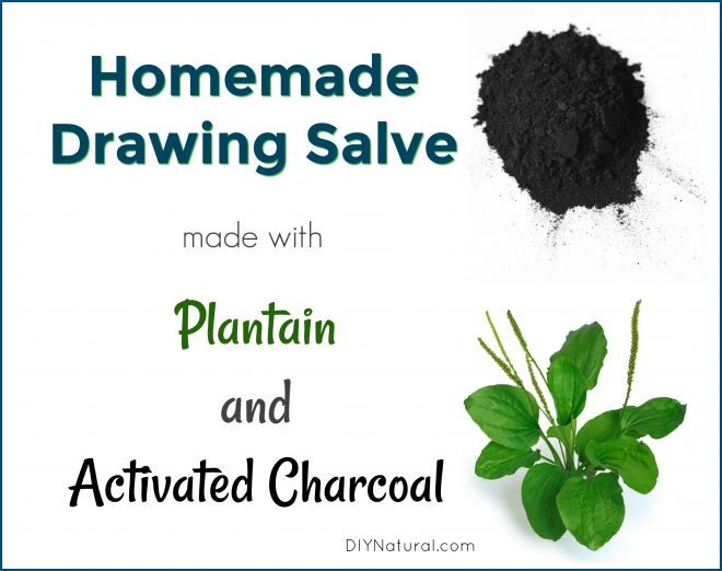 svg black and white stock Drawing salves plant. Homemade salve an activated