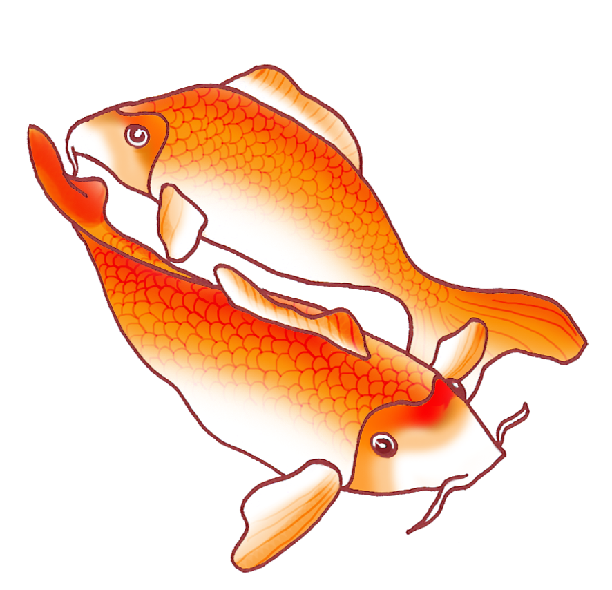 royalty free download Two orange pinterest. Drawing s koi fish