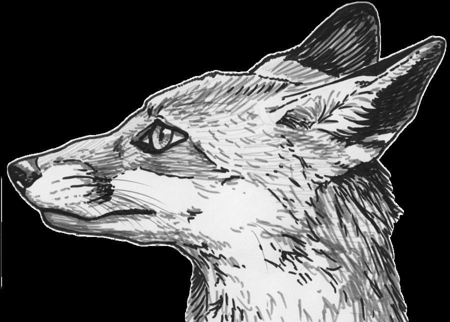 banner royalty free stock Drawing pic sketch. Silvercrossfox fox profile