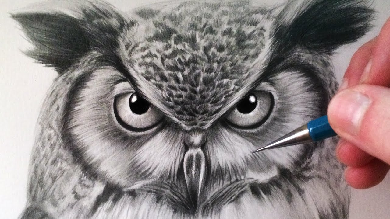 clip art transparent library How to draw an. Drawing owls.