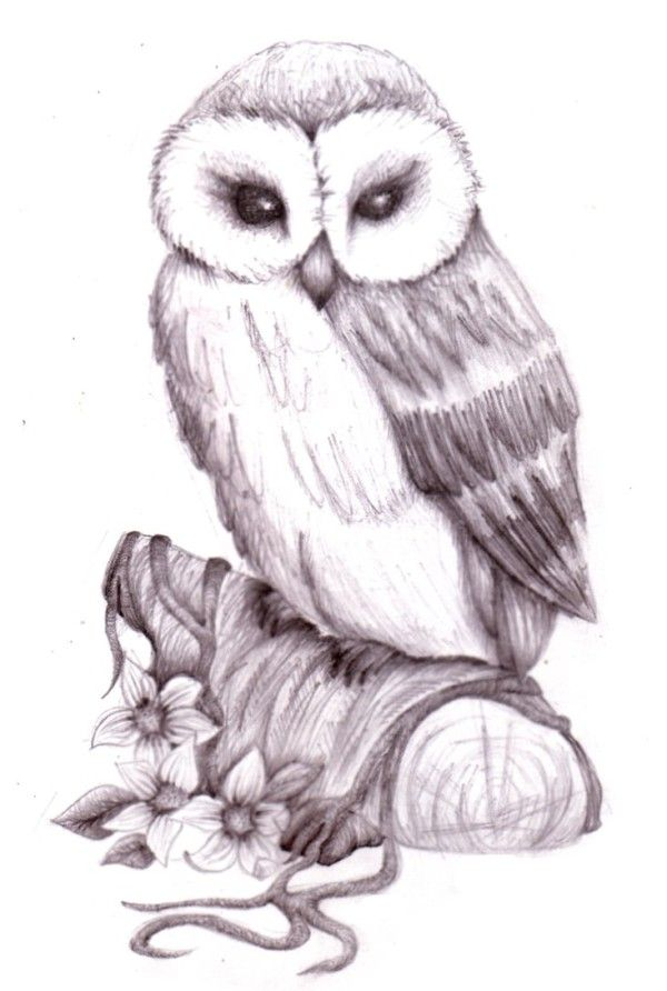 graphic black and white library Pics for easy sketches. Drawing owl anime
