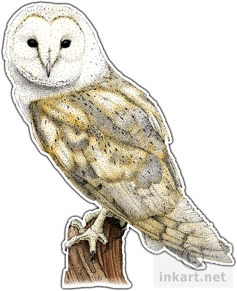 image free download  australian for free. Drawing owl barn