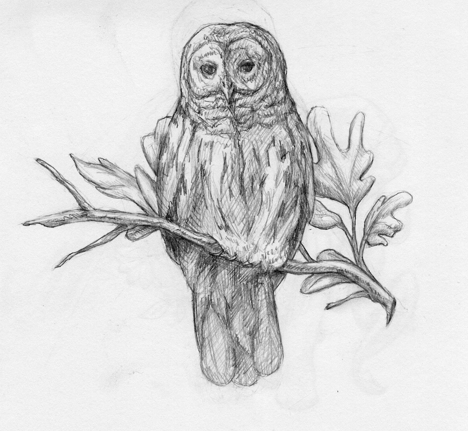 vector freeuse library On a branch in. Drawing owl barred