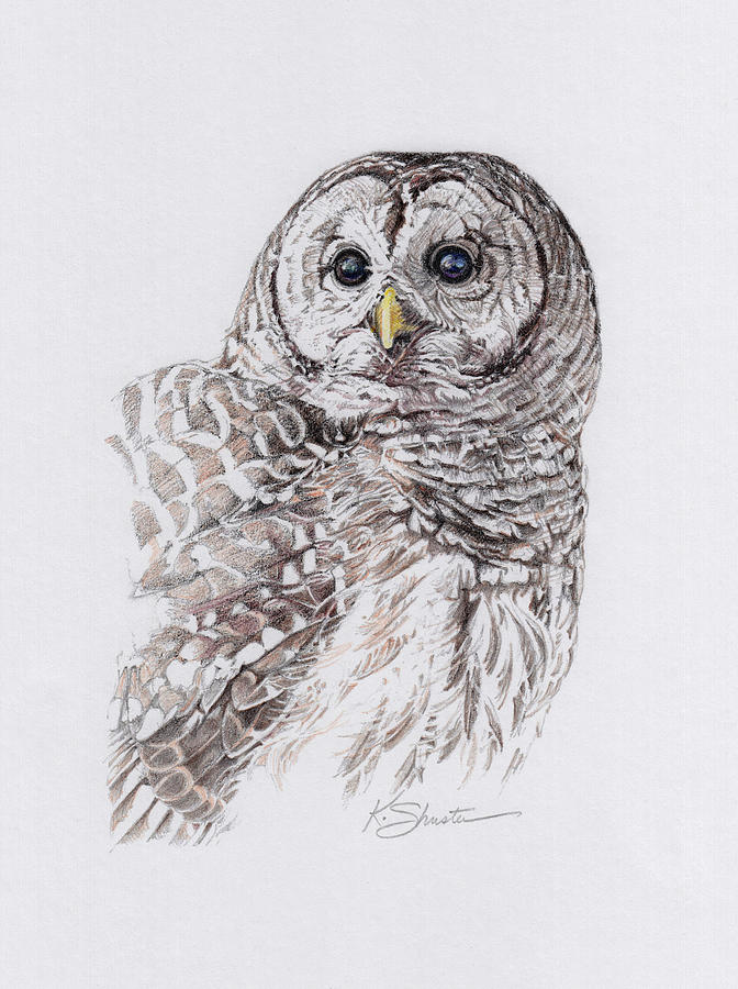banner free library Drawing owl barred.