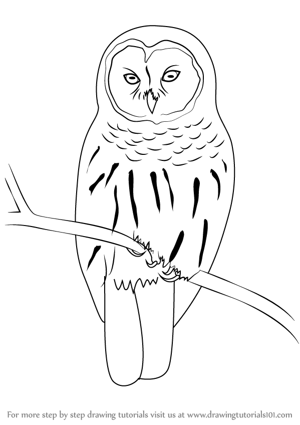 image Learn how to draw. Drawing owl barred